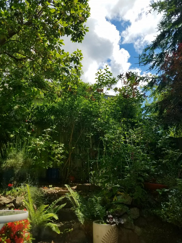 View from Bed at Garden Studio